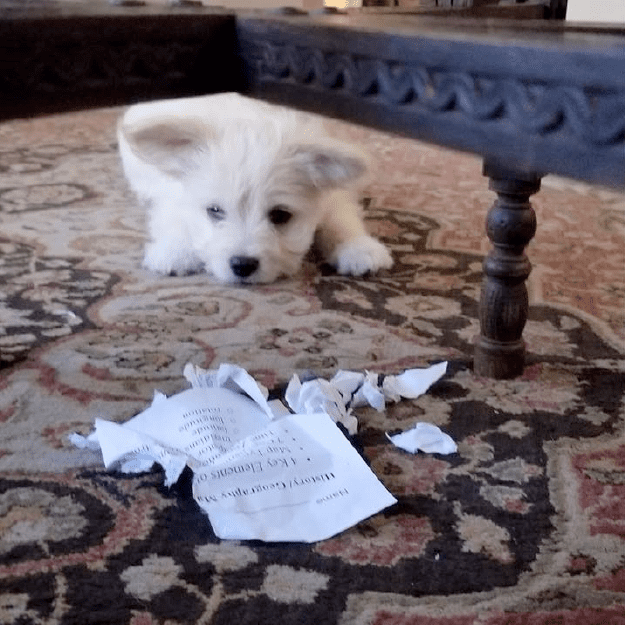 When a dog literally eats your homework